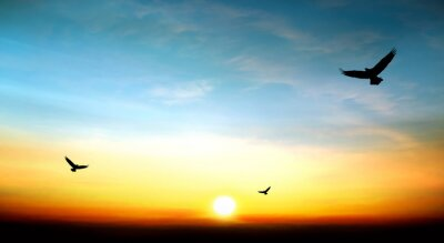 Obraz eagle flying in the sky beautiful sunset