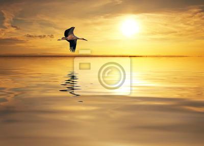 Obraz Elegancia en el lago