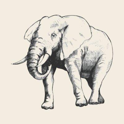 Obraz Elephant Sketch
