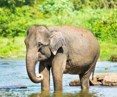 Obraz Elephatnt