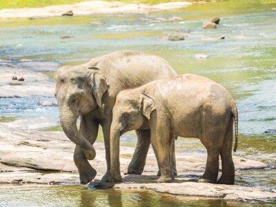 Obraz Elephatnts