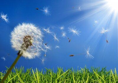Obraz Exkluzivní - alergie koncepce na jaře