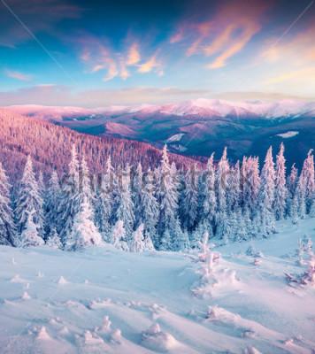 Obraz Fantastické zimní východ slunce v Karpatech se sněhovými stromy. Barevná venkovní scéna, koncept šťastného nového roku. Umělecký styl po zpracování fotografie.