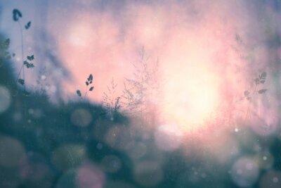 Obraz Fantasy západ slunce bokeh rozmazané pozadí louka