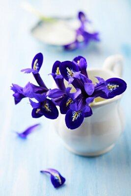 Obraz Fialové květiny Iris v ročníku poháru