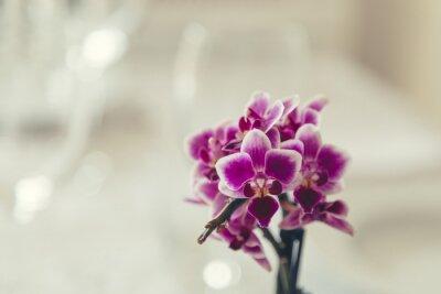 Obraz Fialový květ v plném květu na krémově bílé pozadí