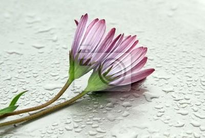 Obraz Flores mojadas