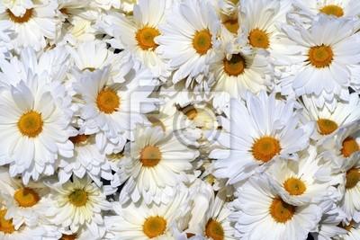 Obraz Fondo de Flores