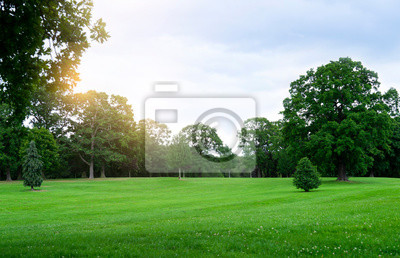 Obraz Fresh air and beautiful natural landscape of meadow with green tree  in the sunny day for summer background, Beautiful lanscape of grass field with forest trees and enviroment public park with sun ray