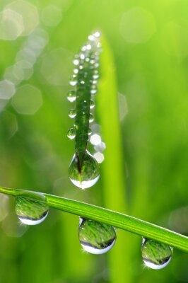 Obraz Fresh grass with dew drops close up