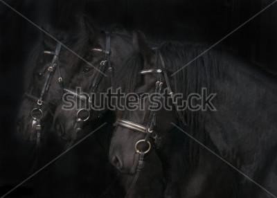 Obraz Frízské koně