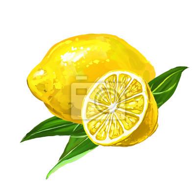 Fruit Citron Vektorove Ilustrace Rucne Kreslenymi Malovane Obrazy Na