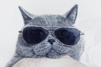 Obraz Funny Hlaveň šedá kočka ve slunečních brýlích