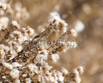 Obraz fuzz na rostlině venku na podzim
