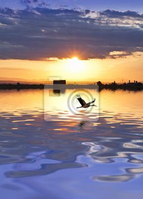 Obraz Garza sobre el lago