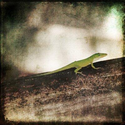 Obraz Gecko Green Cameleon ještěrka na Brown Wood Branch