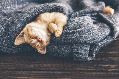 Obraz Gigner kotě spí