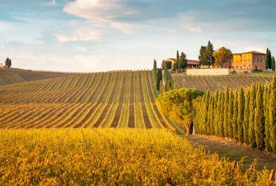 Obraz Golden vineyards in autumn at sunset, Chianti Region, Tuscany, Italy