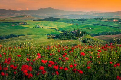 Obraz Grain fields with red poppies at sunset in Tuscany, Italy