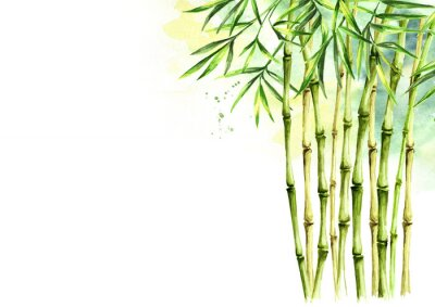 Obraz Green bamboo background, stems and leaves, Asian rainforest. Watercolor hand drawn  isolated illustration