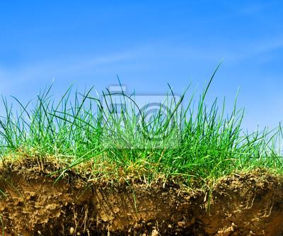 Ground, tráva, obloha průřez