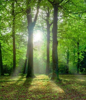 Obraz Grüner Wald im Sommer mit Gegenlicht