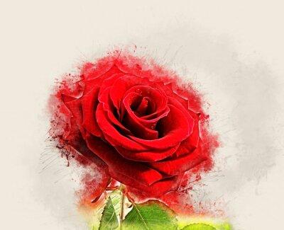 Obraz Grunge Rose image