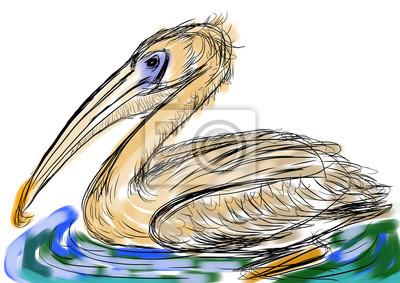 hand draw bird Pelecanidae