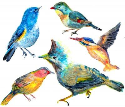 hand draw pták