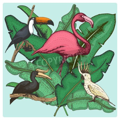Obraz hand drawn vector realistic bird, sketch graphic style, set of domestic. cockatoo parrot and rhinoceros hornbill, toco toucan and flamingo