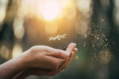 Obraz Hands holding green plant for gardening. New life and hope concept image.