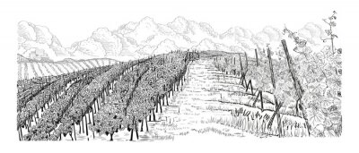 Obraz Hill of vineyard landscape with city, clouds on horizont hand drawn sketch vector illustration isolated on white