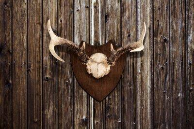 Obraz Horns on a wooden wall