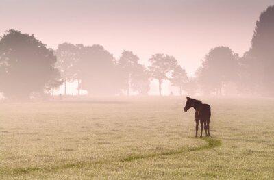 Obraz hříbě silueta na pastvině v mlze