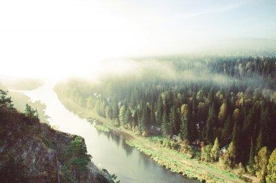 Obraz hustá ranní mlha v jehličnatého lesa. jehličnaté stromy, houštiny zelený les.
