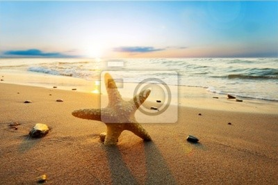 Hvězdice na pláži
