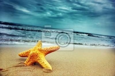 Hvězdice na tropické pláži