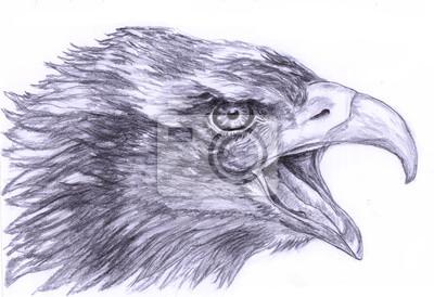 ilustrace Nakreslete Eagle Head