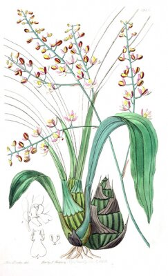 Obraz Ilustrace rostliny