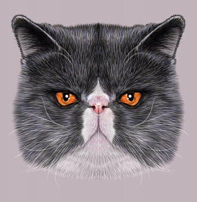 Obraz Ilustrační portrét mainské mývalí. Cute bi-color domácí kočka se zelenýma očima.