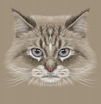 Obraz Ilustrační Portrét sibiřská kočka. Roztomilých domácí barevný bod Kočka s modrýma očima.