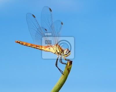 Obraz insecto y cielo