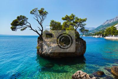 Island a stromy