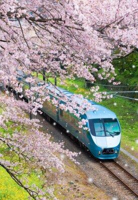Obraz Japonsko vlak v Sakura třešňové květy moře v Yamakita Town, Kanagawa prefektura