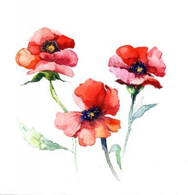 Obraz jarní květiny máku malba akvarel na bílém pozadí