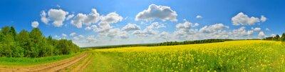 Obraz Jarní květiny pole