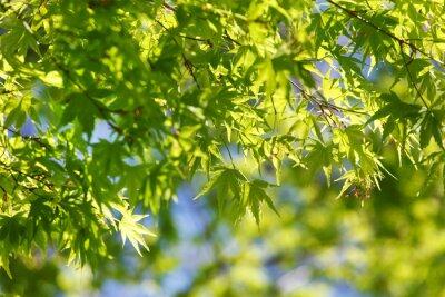 Obraz jarní strom