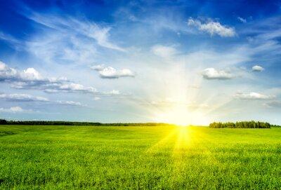 Obraz Jaro léto zelené louce krajina krajina
