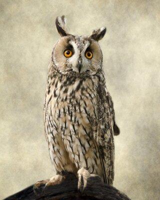 Obraz Kalous ušatý, Struktury přidal, aby se sovou krásu.