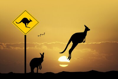 Obraz Kangaroo sign opatrnost